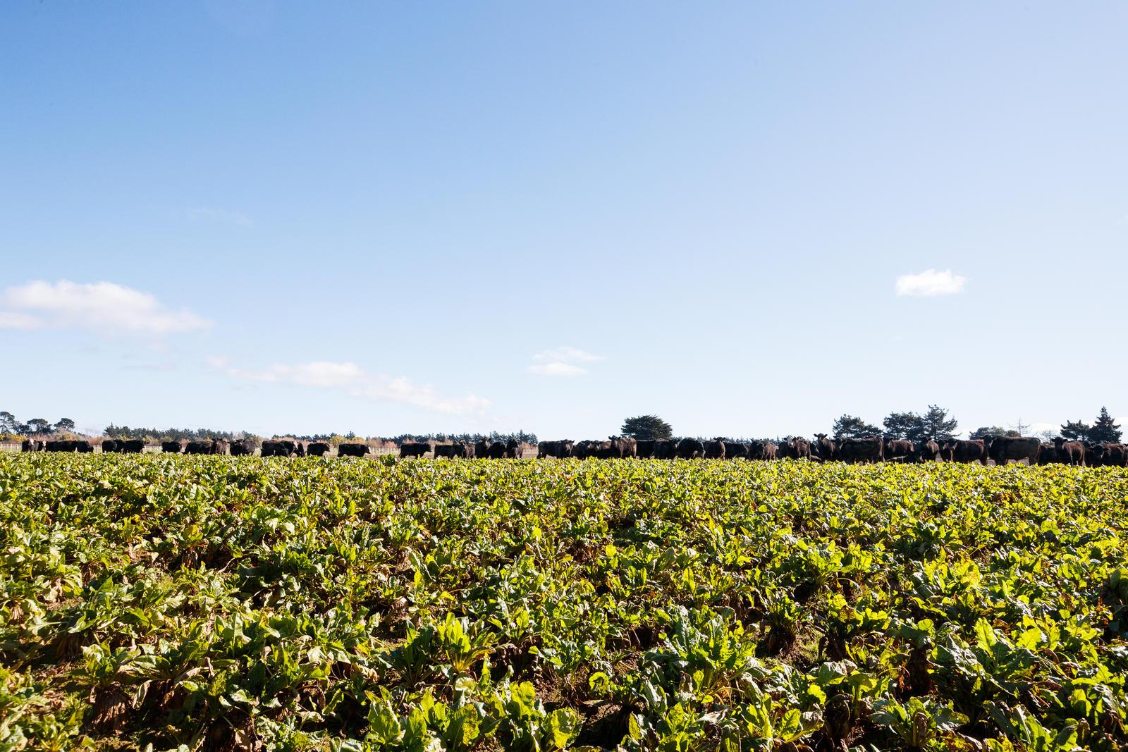 Nzr nz real estate awaiti 116ha of versatile soils for Soil not draining